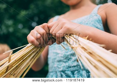 Child And Spikelets, Spikelets In Children's Hands.