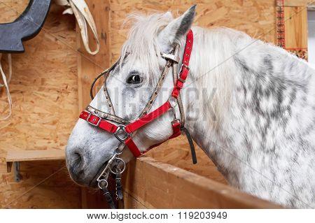 One Horse Gray-white