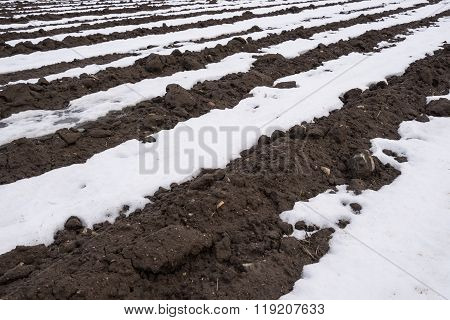 Snowy field potato furrows. White snow and black soil.