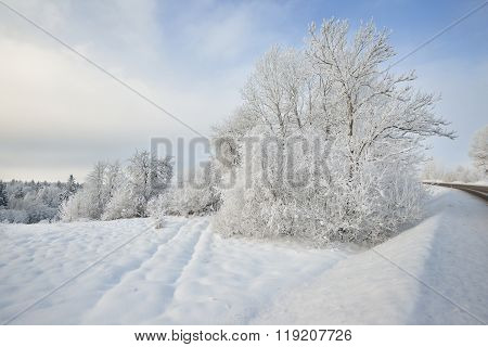 Tracks On A Snow Covered Field With Deciduous Trees In Rime