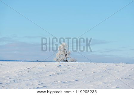 Lonely Oak Tree On A Snowcovered Winter Field