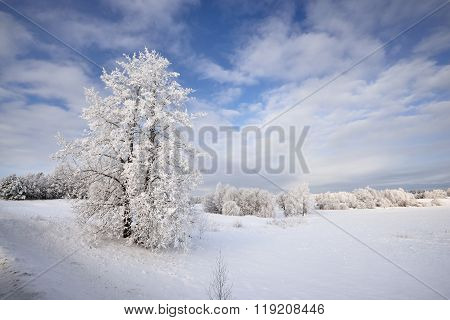 Winter Wonderland Landscape With Snow And Rime Covered Bushes