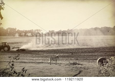 Bw Landscape With Harvested Field And White Horse