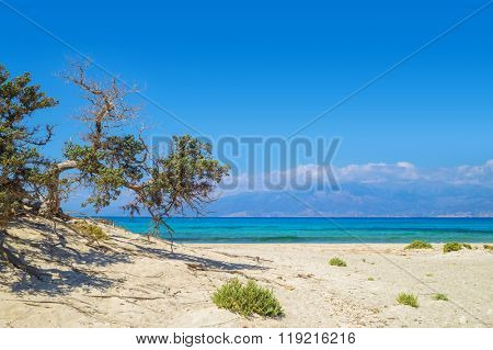 Chrisi (Chrysi) island background with weird lebanon cedar tree, Crete, Greece. One of the most beautiful uninhabited island of Greece.