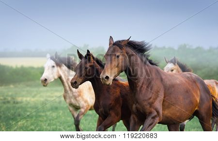 Mare with foal galloping in a field. Three horses close-up on a background of dark sky