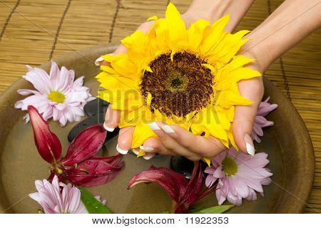 Woman holding a sunflower with her hands