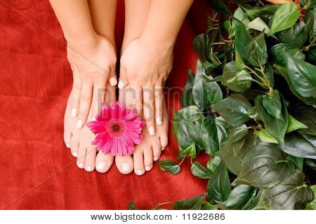 Manicured hands and pedicured feet
