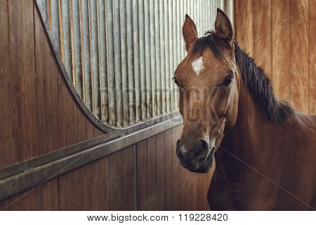Alert Brown Horse