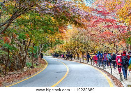 Tourists taking photos of the beautiful scenery around Naejangsan park,South Korea.