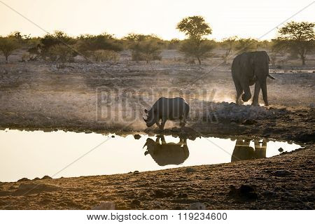 Elephant and rhino at a water hole in Etosha National Park.