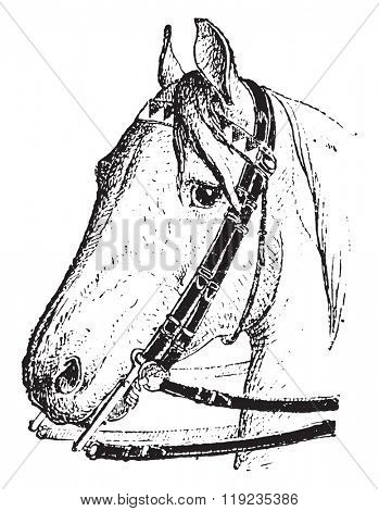 Flange, Snaffle bit, vintage engraved illustration. Dictionary of words and things - Larive and Fleury - 1895.