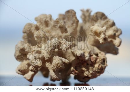 White large coral.