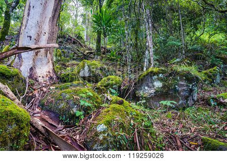 Nature, Rainforest In Lamington National Park, Queensland, Austr