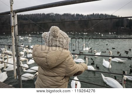 Toddler Boy Standing By The Lake Looking Large Group Of Swans And Ducks