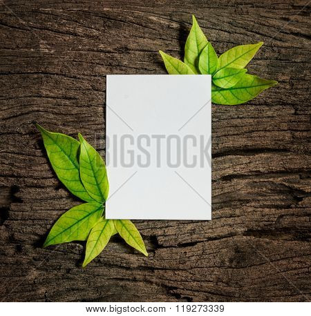 White Blank Paper Sheet With Fresh Spring  Green Leafs Border Frame On Wooden Background , Eco Natur