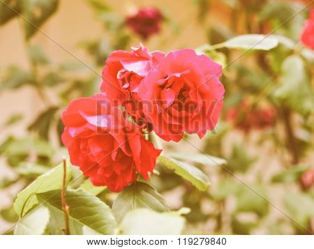 Retro Looking Red Rose