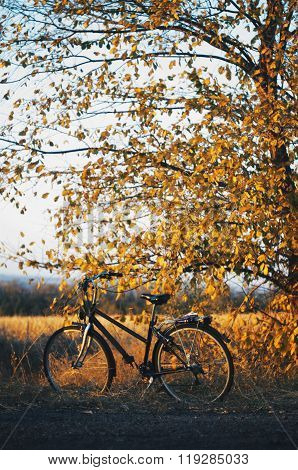Bicycle in the garden. Old bicycle on green grass. Mountain bike
