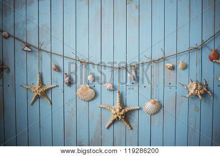Seashells On Blue Boards Vacation Holiday