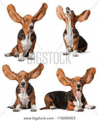 Ears.