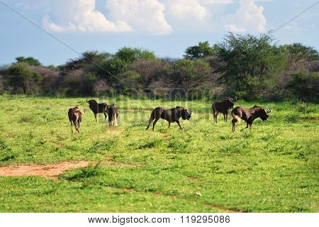 African Wildlife, Namibia