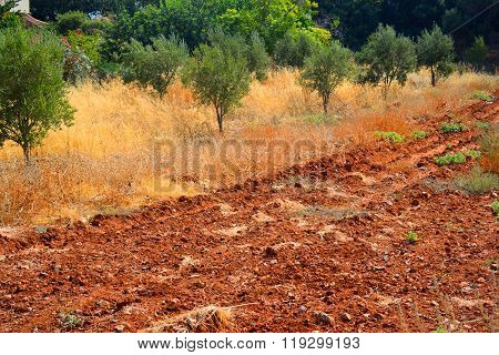 Arable Land.