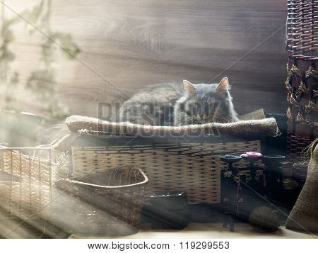 The cat in the attic in the sun