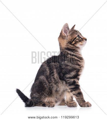 The Curious Little Kitten
