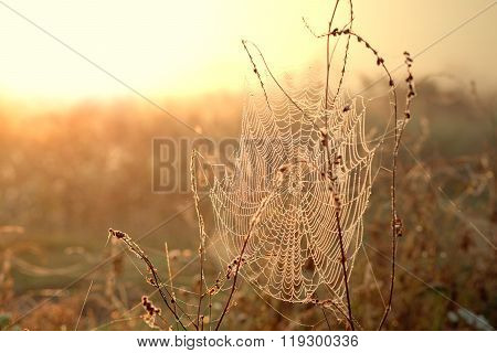 Spiderwed With Dew Drops At Sunrise