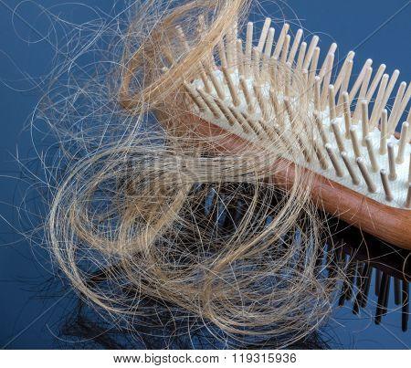 hairbrush with hair