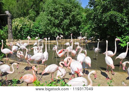 A large group of flamingos at the watering