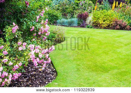 Lovely Light Pink Roses Bushes In Victorian Garden