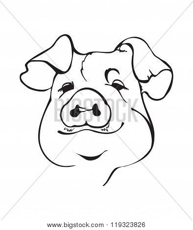 Black And White Pig Fase