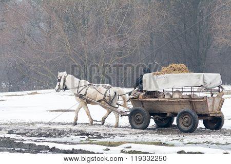 Calugareni, Romania - January 17: Calugareni Forest On January 17, 2016 In Calugareni Giurgiu.  Hori