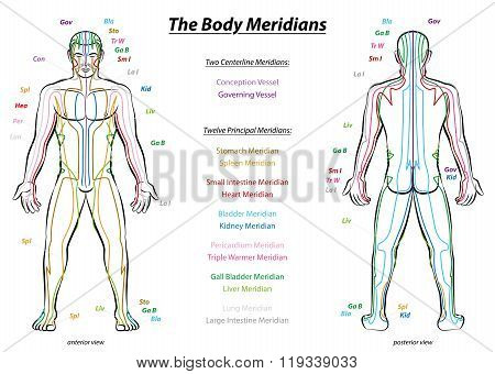 Meridian System Description Chart Male Body