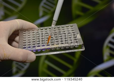 Dna Testing In The Laboratory.