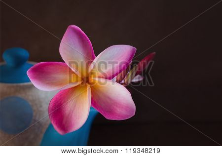 (still-life) Beautiful Flower Plumeria Or Frangipani In Teapot