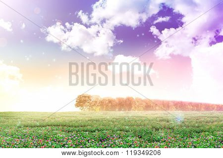 Abstract Background Dreamy View Of Purslane Or Sun Plant Flower Field