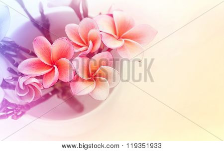(soft Vintage) Pink  Frangrant Flowers Plumeria Or Frangipani In White Cup