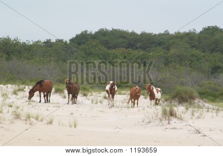 Wild Feral Gang