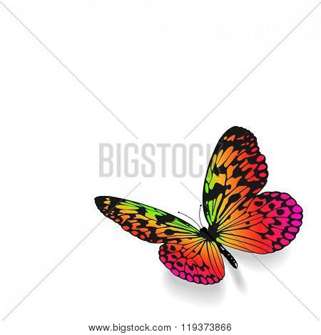Colorful butterfly on white background with copy space.