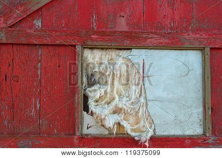 Old Door and Broken Window