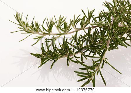 Twig Of Green Fresh Rosemary,mediterranian Spice.