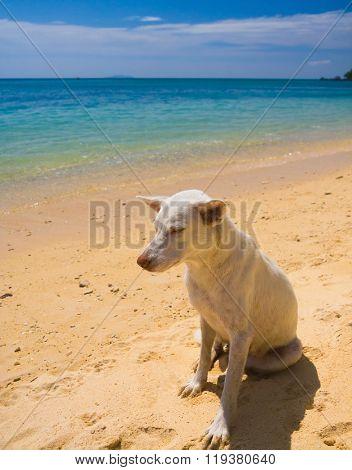 Smart Eyes Salty Sea Dog