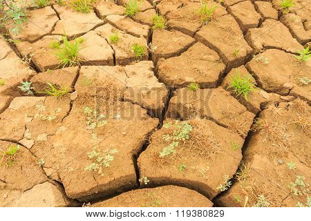 Surface Crack Of  Soil In Arid Area