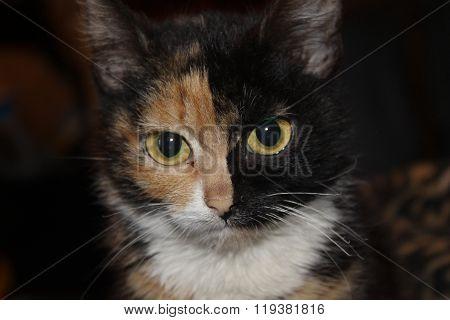 Tree colored cat