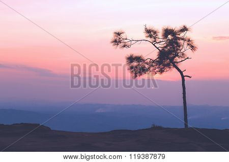 Pine Tree With Sweet Sky During Sunset