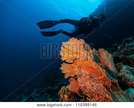 Male scuba diver underwater examine closely coral reef