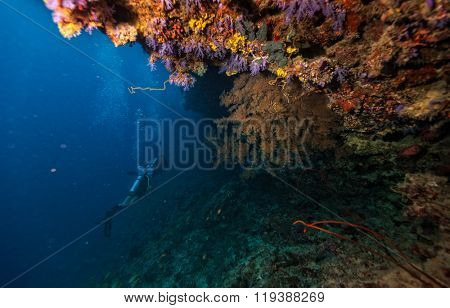 Group of scuba divers underwater examine coral reef
