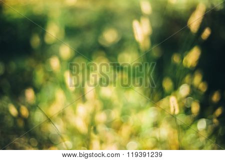 Nature Green Blurred Background Of Out Of Focus Grass Or Bokeh,