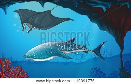 Shark and stingray swimming underwater illustration
